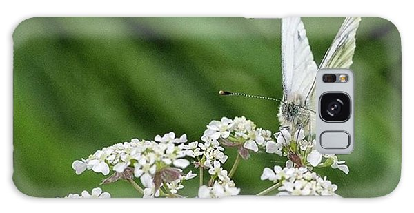 Galaxy Case - A Green-veined White (pieris Napi) by John Edwards