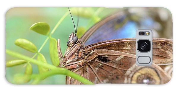 Blue Morpho Butterfly Galaxy Case by Tamara Becker