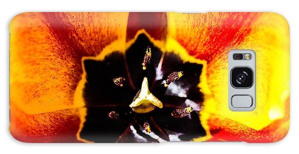A Look Inside A Tulip  Galaxy Case