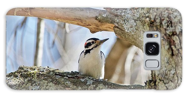 A Male Downey Woodpecker  1111 Galaxy Case by Michael Peychich
