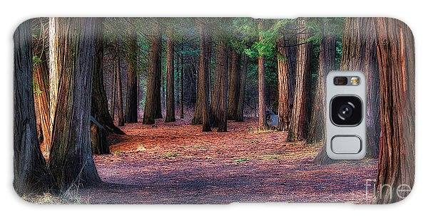 A Path Of Redwoods Galaxy Case