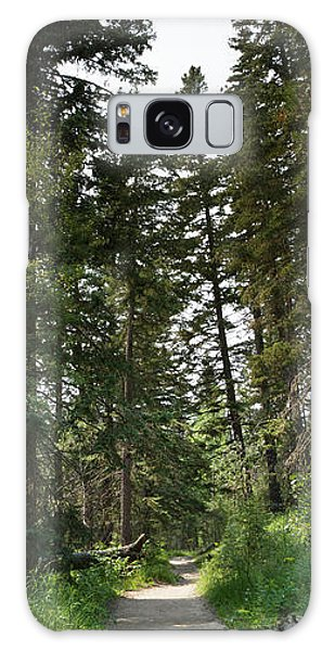 A Path Through The Trees Galaxy Case
