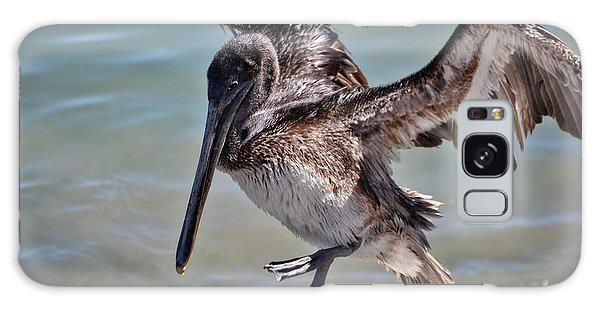 A Pelican Practising A Karate Kick Like Daniel In The Karate Kid Galaxy Case