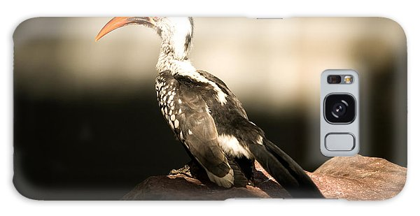 A Red-billed Hornbill At The Lincoln Galaxy Case
