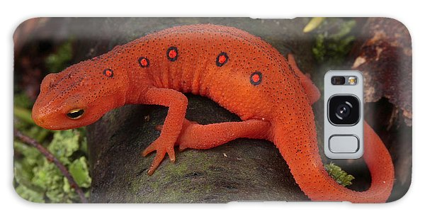 Newts Galaxy Case - A Red Eft Crawls On The Forest Floor by George Grall