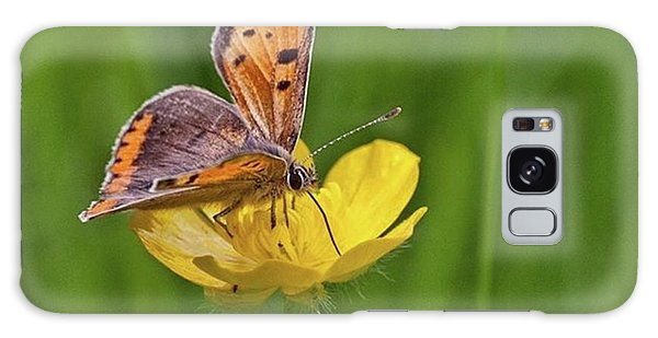 Galaxy Case - A Small Copper Butterfly (lycaena by John Edwards