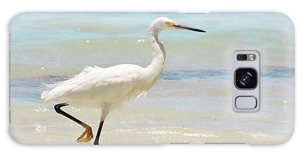 Galaxy Case - A Snowy Egret (egretta Thula) At Mahoe by John Edwards