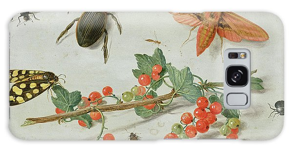 A Sprig Of Redcurrants With An Elephant Hawk Moth, A Magpie Moth And Other Insects, 1657 Galaxy Case