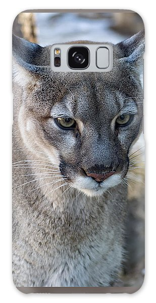 A Stunning Mountain Lion Galaxy Case