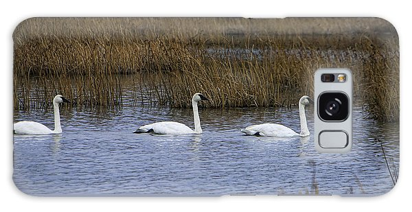 A Trio Of Swans Galaxy Case