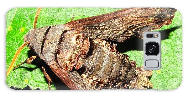 Abbotts Sphinx Moth Galaxy Case