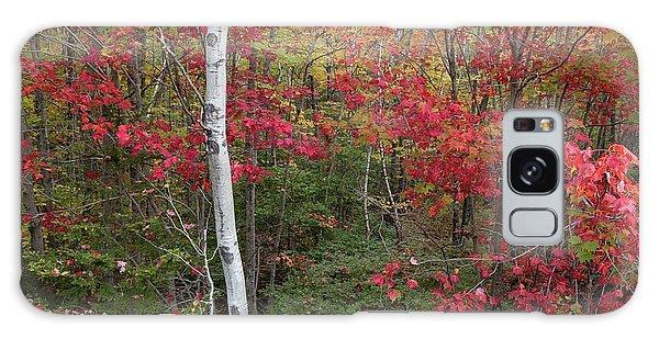 Acadia Fall Colors Galaxy Case