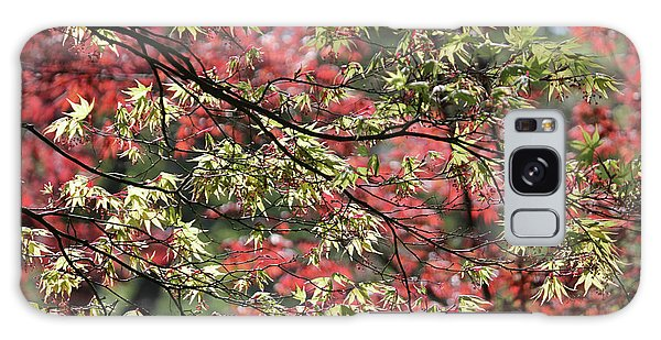Acer Leaves In Spring Galaxy Case
