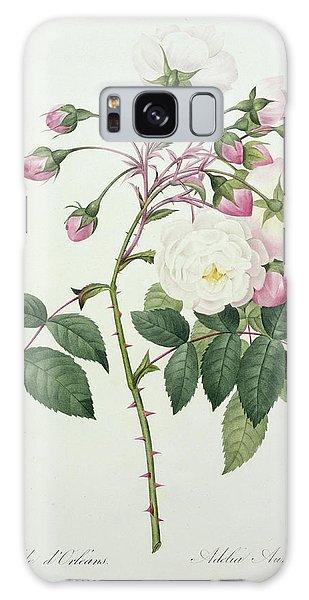 Botanical Garden Galaxy Case - Adelia Aurelianensis by Pierre Joseph Redoute
