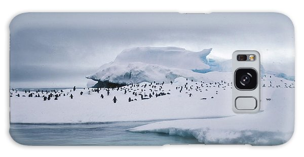 Adelie Penguins On Iceberg Weddell Sea Galaxy Case