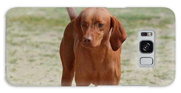 Adorable Redbone Coonhound Standing Alone Galaxy Case