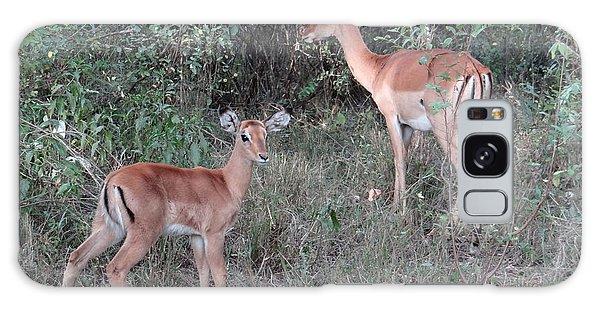 Africa - Animals In The Wild 2 Galaxy Case