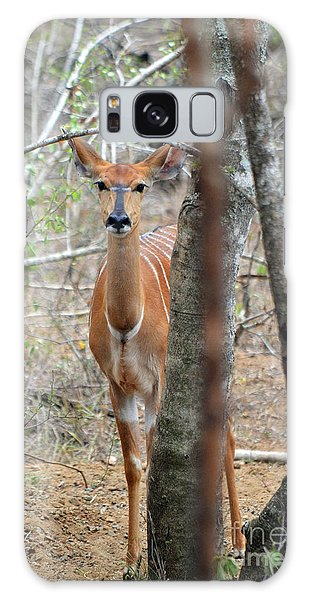 Africa Safari Bushbuck 2 Galaxy Case