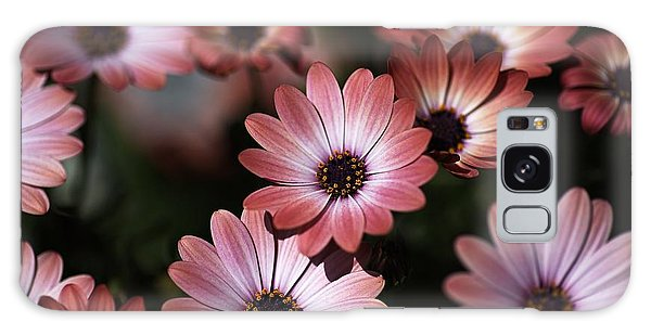 African Daisy Zion Red Galaxy Case