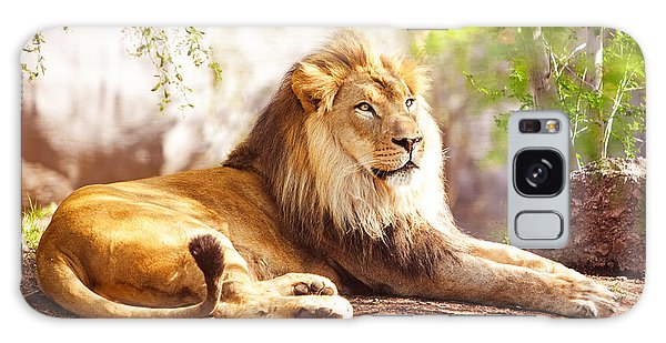 African Lion Laying In Forest Galaxy Case