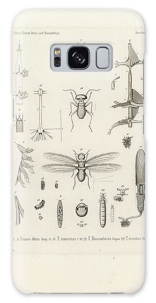 African Termites And Their Anatomy Galaxy Case
