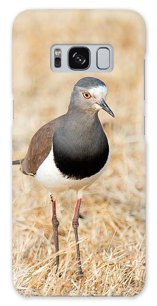 Lapwing Galaxy Case - African Wattled Lapwing Vanellus by Panoramic Images