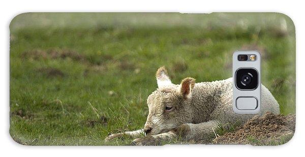 Sheep Galaxy Case - Afternoon Nap by Angel Ciesniarska