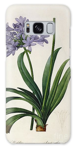 Bloom Galaxy Case - Agapanthus Umbrellatus by Pierre Redoute