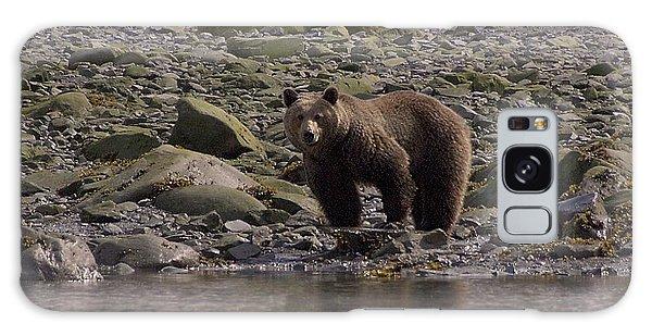 Alaskan Brown Bear Dining On Mollusks Galaxy Case