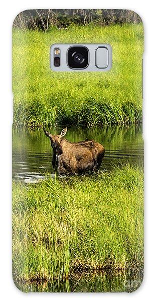 Alaskan Moose Galaxy Case