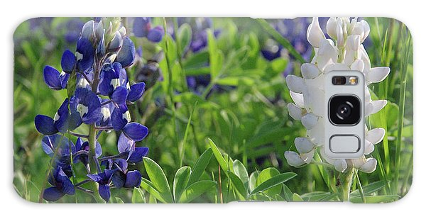 Albino And Blue Bluebonnet Galaxy Case by Robyn Stacey