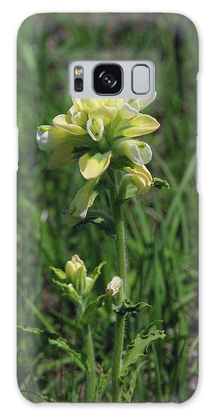 Albino Texas Paintbrush Galaxy Case