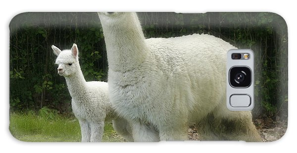 Alpaca And Foal Galaxy Case