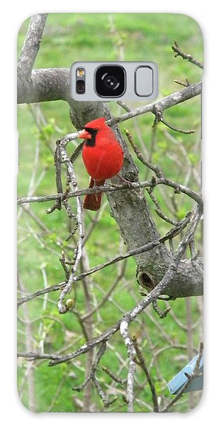 Always With Us -cardinals Galaxy Case