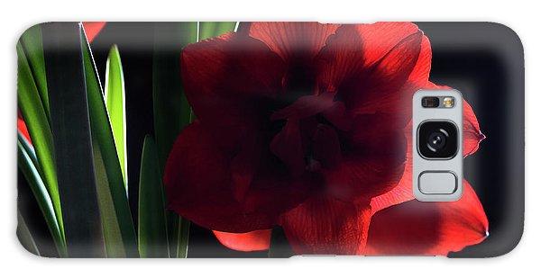 Amaryllis Bloom Galaxy Case