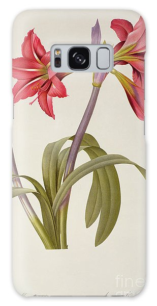 Plants Galaxy Case - Amaryllis Brasiliensis by Pierre Redoute