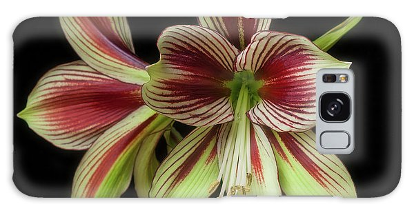 Amaryllis 'papilio Improved' Galaxy Case