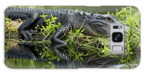 American Alligator In The Wild Galaxy Case