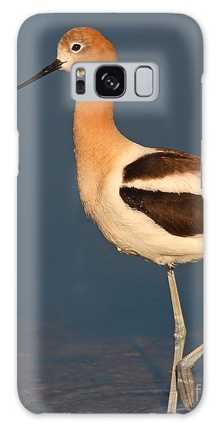 American Avocet Standing Tall Galaxy Case by Max Allen