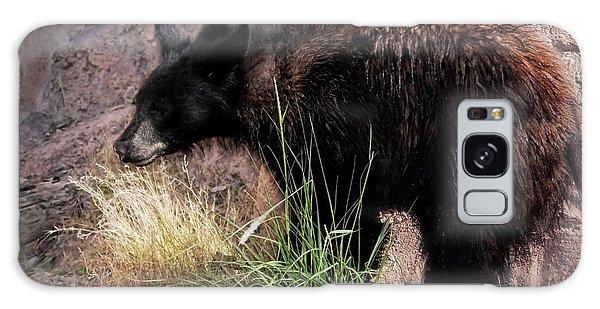 American Black Bear Cub Galaxy Case by Elaine Malott