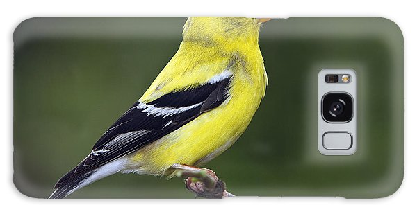 American Golden Finch Galaxy Case