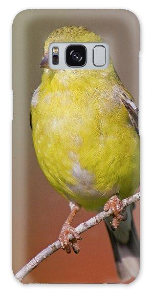 American Goldfinch  Female Galaxy Case