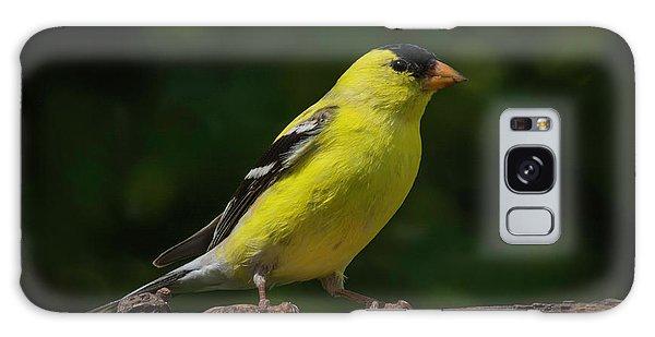 American Goldfinch Male Galaxy Case