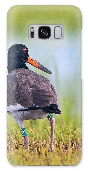 American Oyster Catcher Galaxy Case
