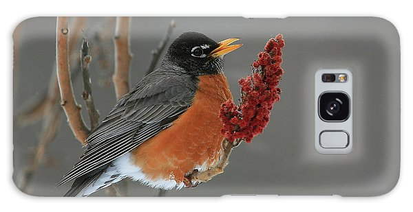American Robin On Sumac Galaxy Case