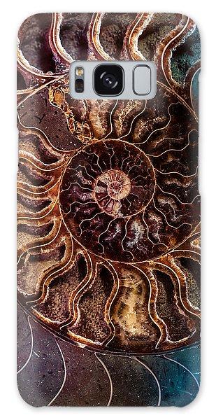 An Ancient Shell Galaxy Case