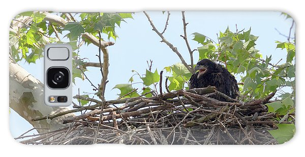 Whining Galaxy Case - An Eaglet Cries by Susan Rissi Tregoning