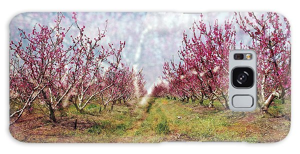 An Orchard In Blossom In The Golan Heights Galaxy Case