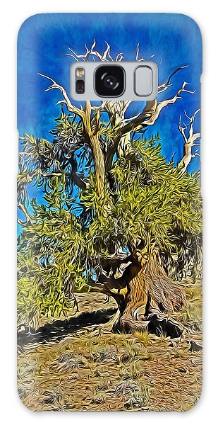 Ancient Bristlecone Pine Galaxy Case
