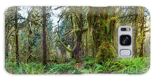 Olympic National Park Galaxy Case - Ancient Forest Panorama by Jamie Pham